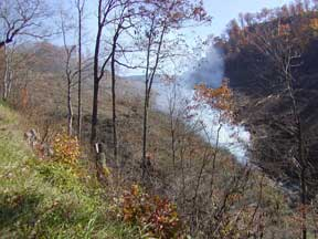 burning trees in Perry county
